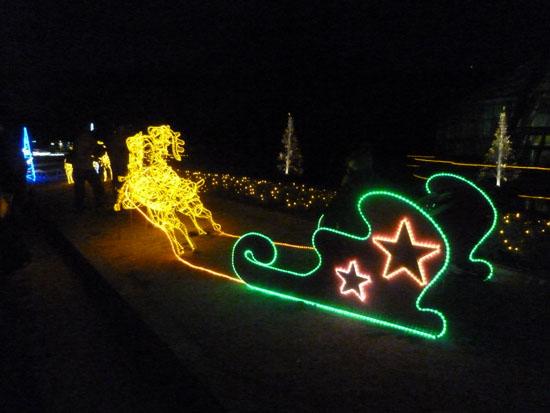 府立植物園 クリスマスイルミネーション_e0048413_21354193.jpg