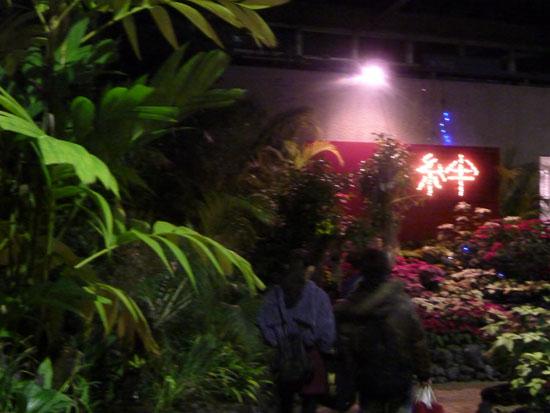府立植物園 クリスマスイルミネーション_e0048413_21361572.jpg
