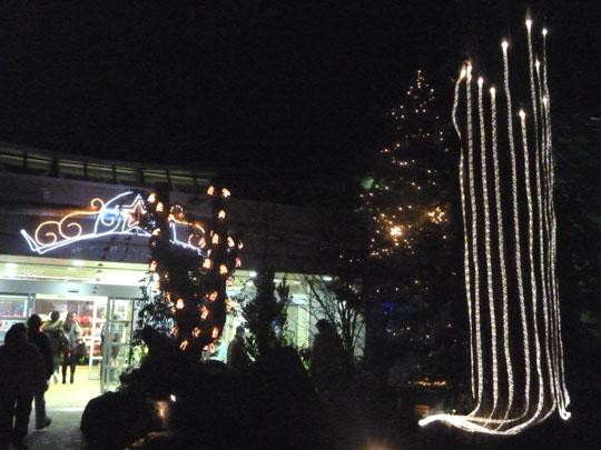 府立植物園 クリスマスイルミネーション_e0048413_2136312.jpg