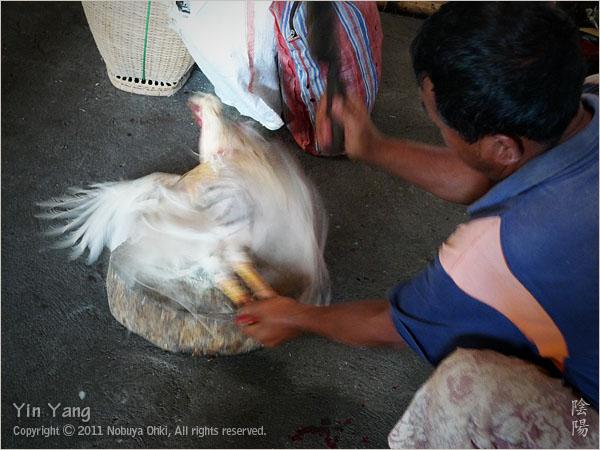闘鶏と子供、バリ島_e0139738_18582048.jpg