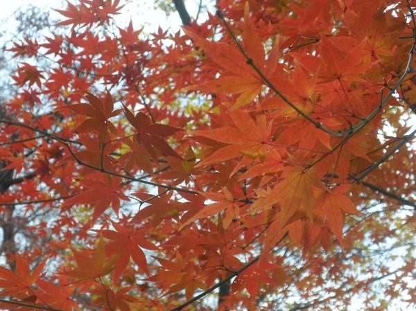 なごりの紅葉と美味しい京都旅・・・1_a0089450_2304671.jpg