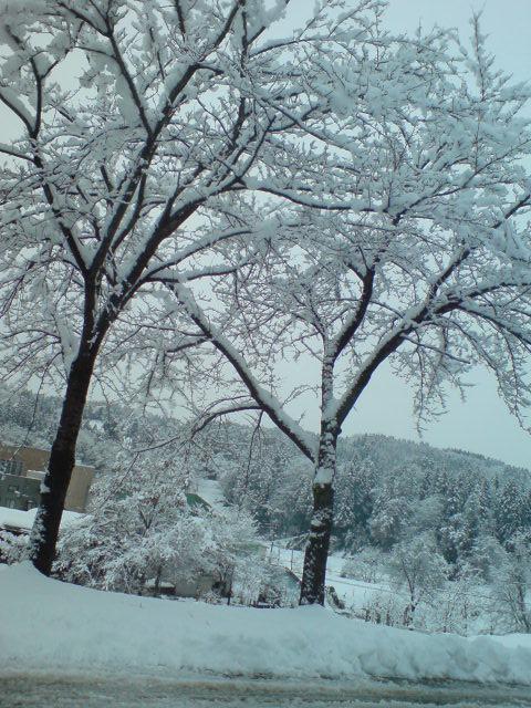 雪景色_d0182179_195986.jpg