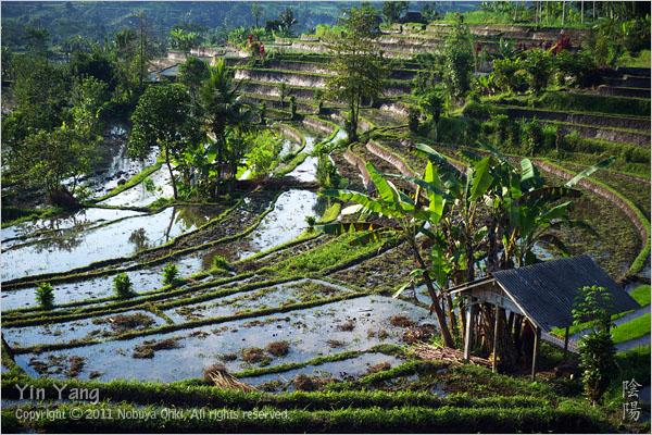 村の少女と棚田の風景、バリ島_e0139738_10401792.jpg