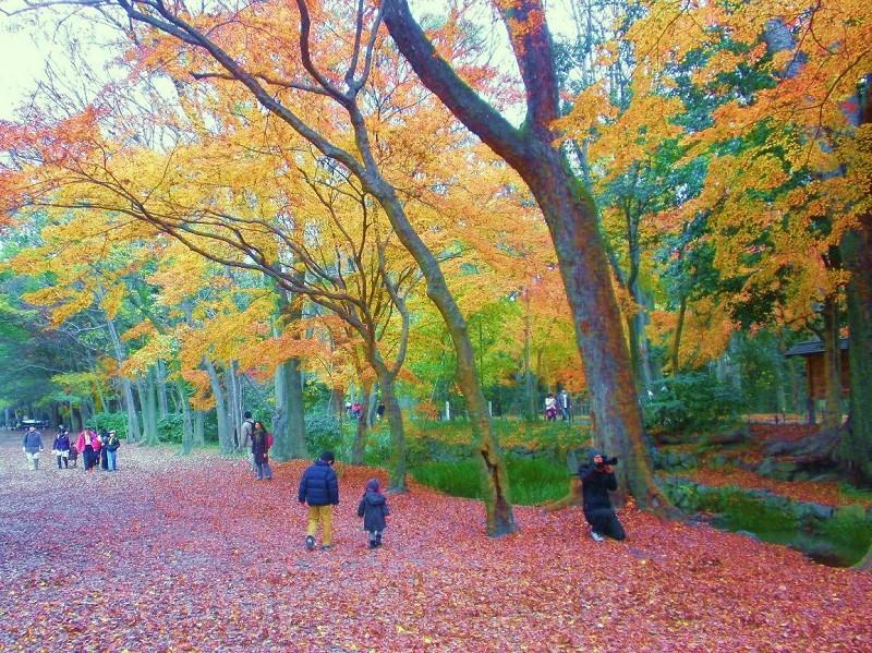 なごりの紅葉と美味しい京都旅・・・2_a0089450_23302598.jpg