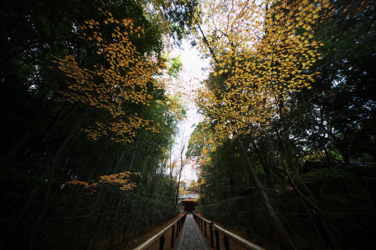 紅葉 2011_f0021869_21563913.jpg