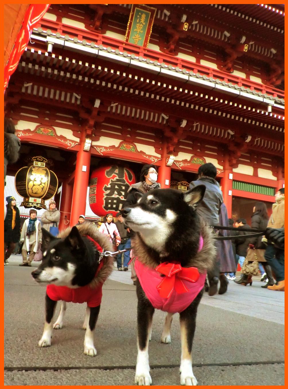 浅草寺・羽子板市へ。綺麗な姫様羽子板見たよ。_e0236072_1915354.jpg