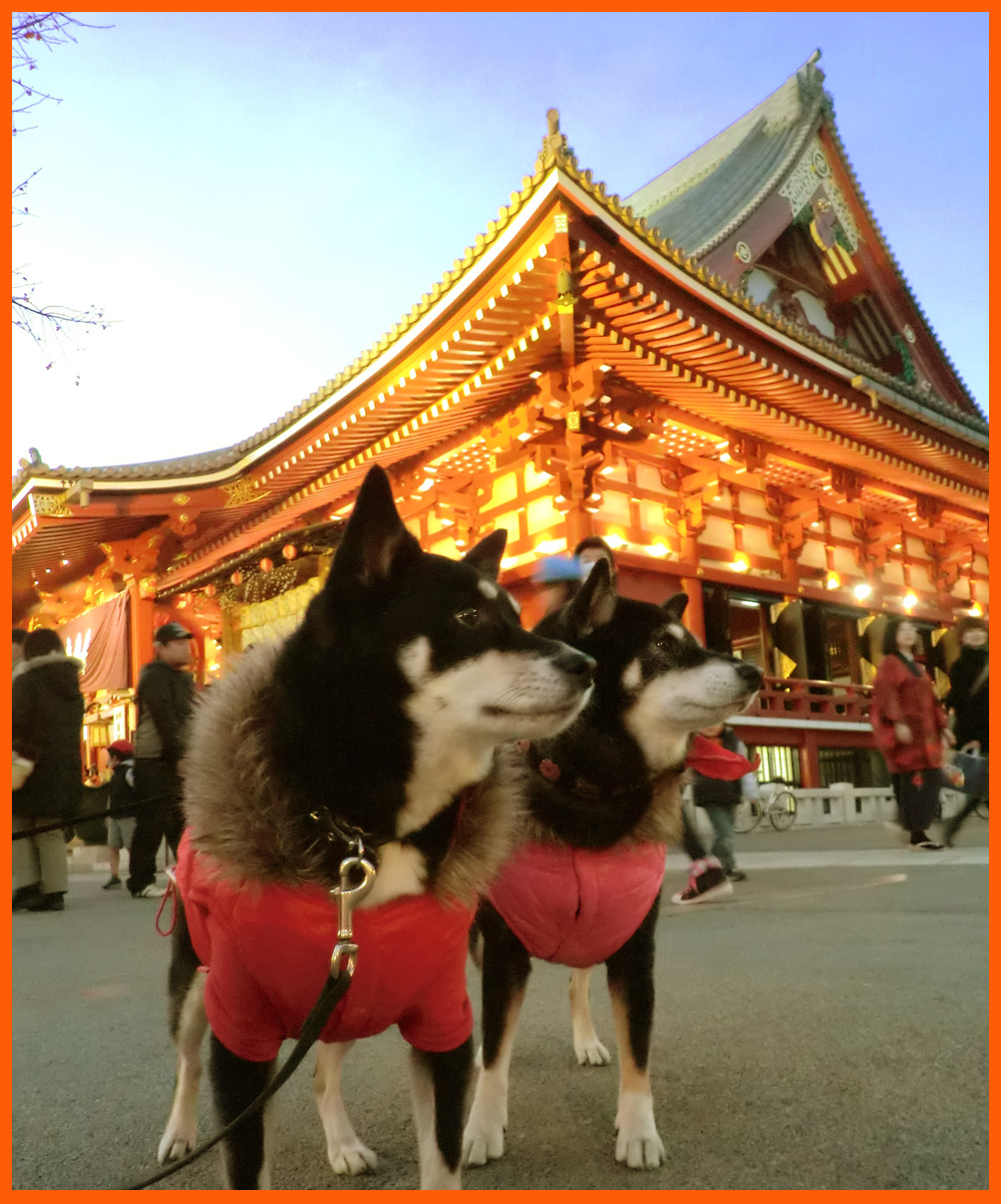 浅草寺・羽子板市へ。綺麗な姫様羽子板見たよ。_e0236072_1932405.jpg