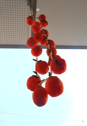 干し柿(つるし柿)_f0221707_1322720.jpg