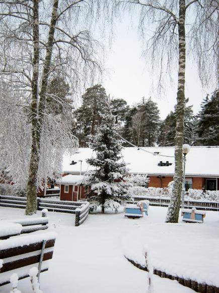 公園のクリスマスツリー_d0241813_71195.jpg