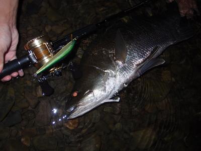 早川さんの伊良湖釣行レポート_a0153216_23253020.jpg