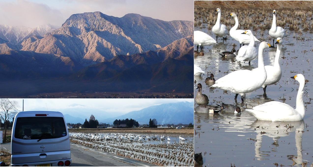 冬の安曇野 白鳥飛来地_a0212730_13473914.jpg