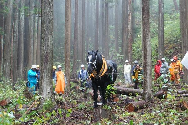 馬で木材を運び出す、馬搬のお話...