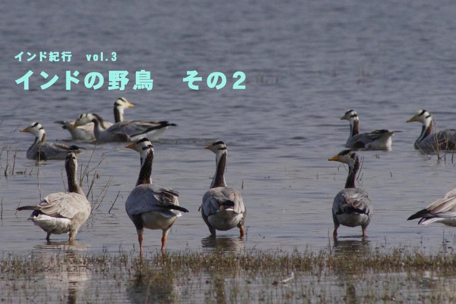 b0144049_16591847.jpg