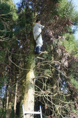 杉玉づくり 2011_f0138874_11223119.jpg