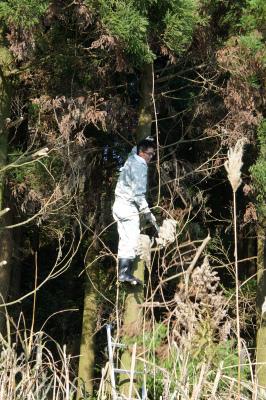 杉玉づくり 2011_f0138874_11224397.jpg