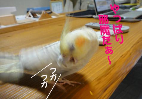 b0240299_16364269.jpg