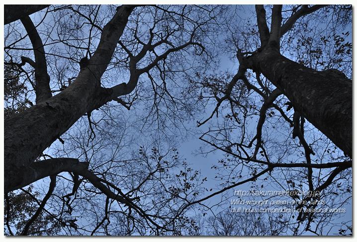 冬枯れの空 毛細血管。_f0235723_17172293.jpg