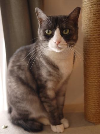 猫のお友だち マイちゃん編。_a0143140_22331423.jpg