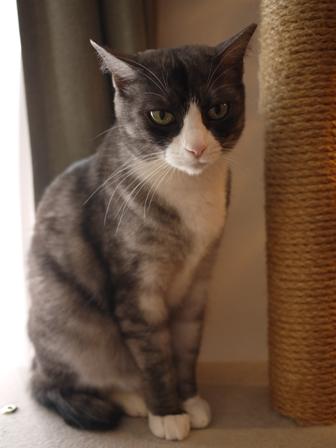 猫のお友だち マイちゃん編。_a0143140_22384655.jpg