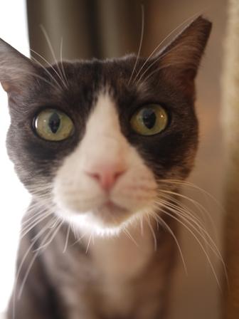 猫のお友だち マイちゃん編。_a0143140_22421715.jpg