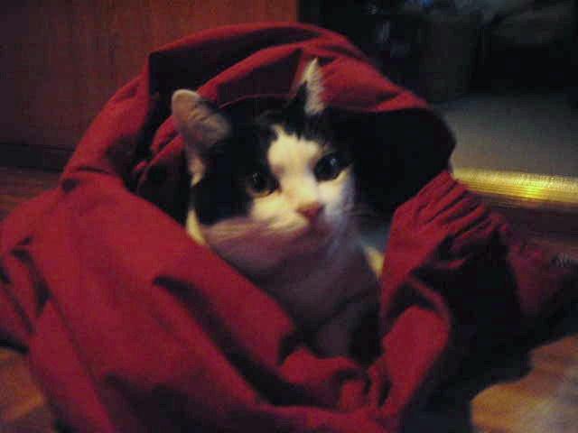 猫との時間_d0116059_17484896.jpg