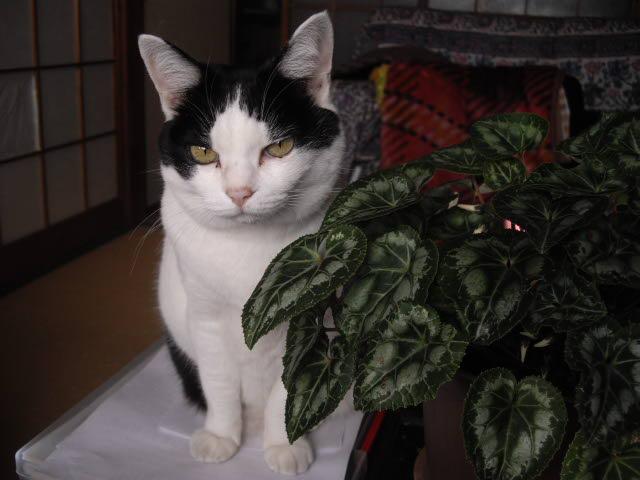 猫との時間_d0116059_17521679.jpg