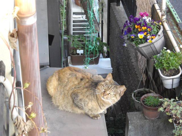 猫との時間_d0116059_17532673.jpg