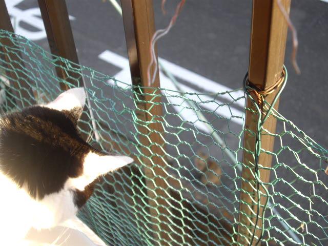 猫との時間_d0116059_17552634.jpg
