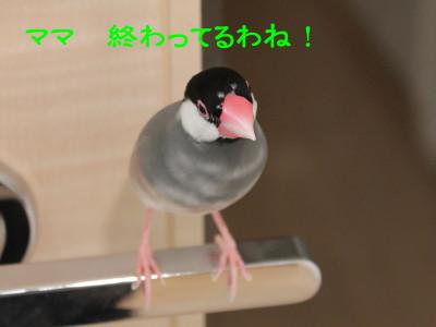 b0158061_2254040.jpg