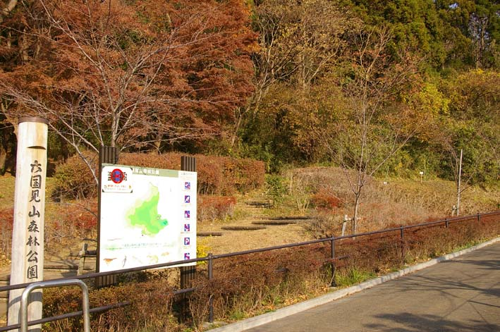 六国見山森林公園南口広場に玉縄桜(2011・12・19)_c0014967_6542048.jpg