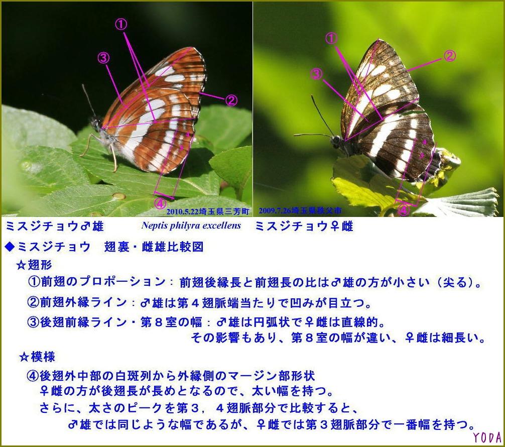 a0146869_6102098.jpg