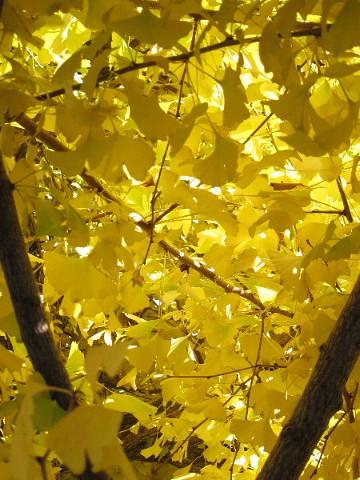 秋から冬を撮る。_b0141773_030319.jpg