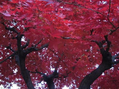 秋から冬を撮る。_b0141773_0305894.jpg