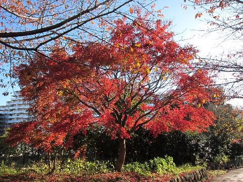 秋から冬を撮る。_b0141773_0315436.jpg