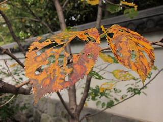 秋から冬を撮る。_b0141773_0321747.jpg