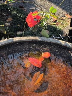秋から冬を撮る。_b0141773_033567.jpg