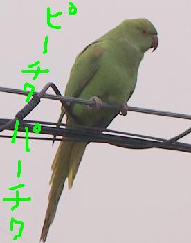d0009175_2011757.jpg