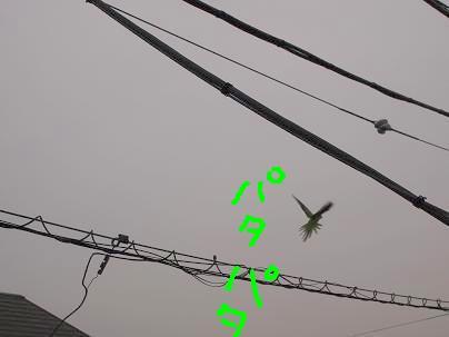 d0009175_20124773.jpg