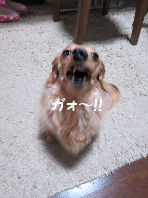 キヤノン Power Shot S100 レビュー クチコミ 写真_b0200291_2071156.jpg