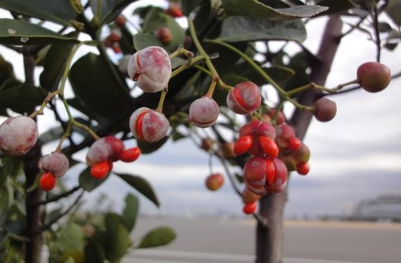 携帯電話で木の特徴を調べてみよう!_e0235911_15453057.jpg