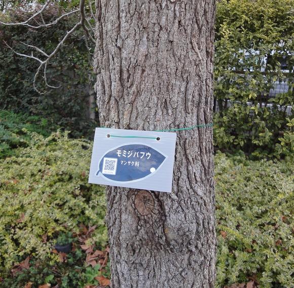 携帯電話で木の特徴を調べてみよう!_e0235911_15523241.jpg
