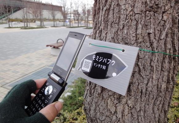 携帯電話で木の特徴を調べてみよう!_e0235911_15533243.jpg