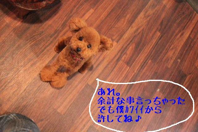 b0130018_21285564.jpg