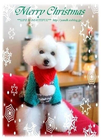 *Merry Christmas 2011*_d0083623_21225492.jpg