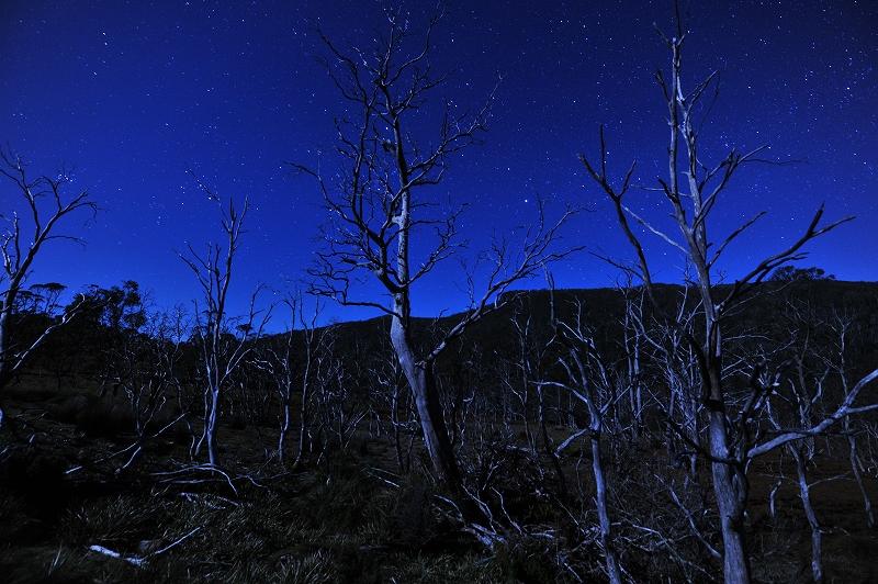 森は生きている_f0050534_10261187.jpg