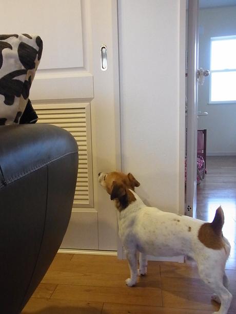 知っている犬_d0143957_15213787.jpg