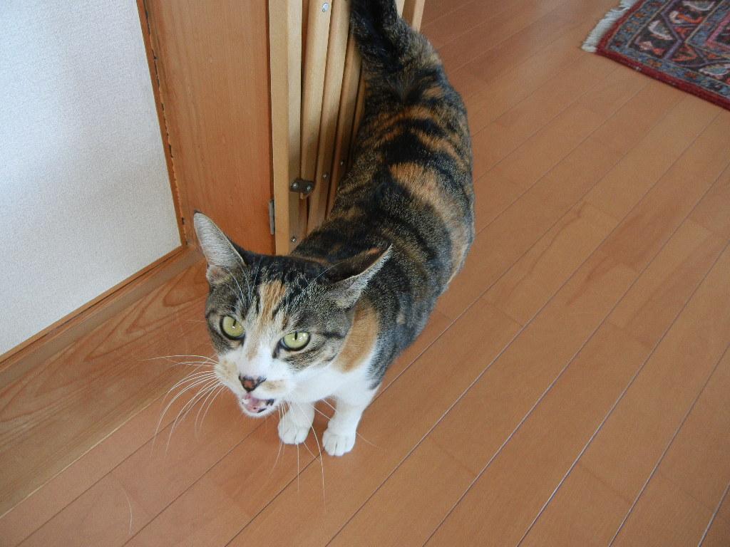 2011年12月23日(金)今日のパパご飯は・・・?_f0060461_14222149.jpg