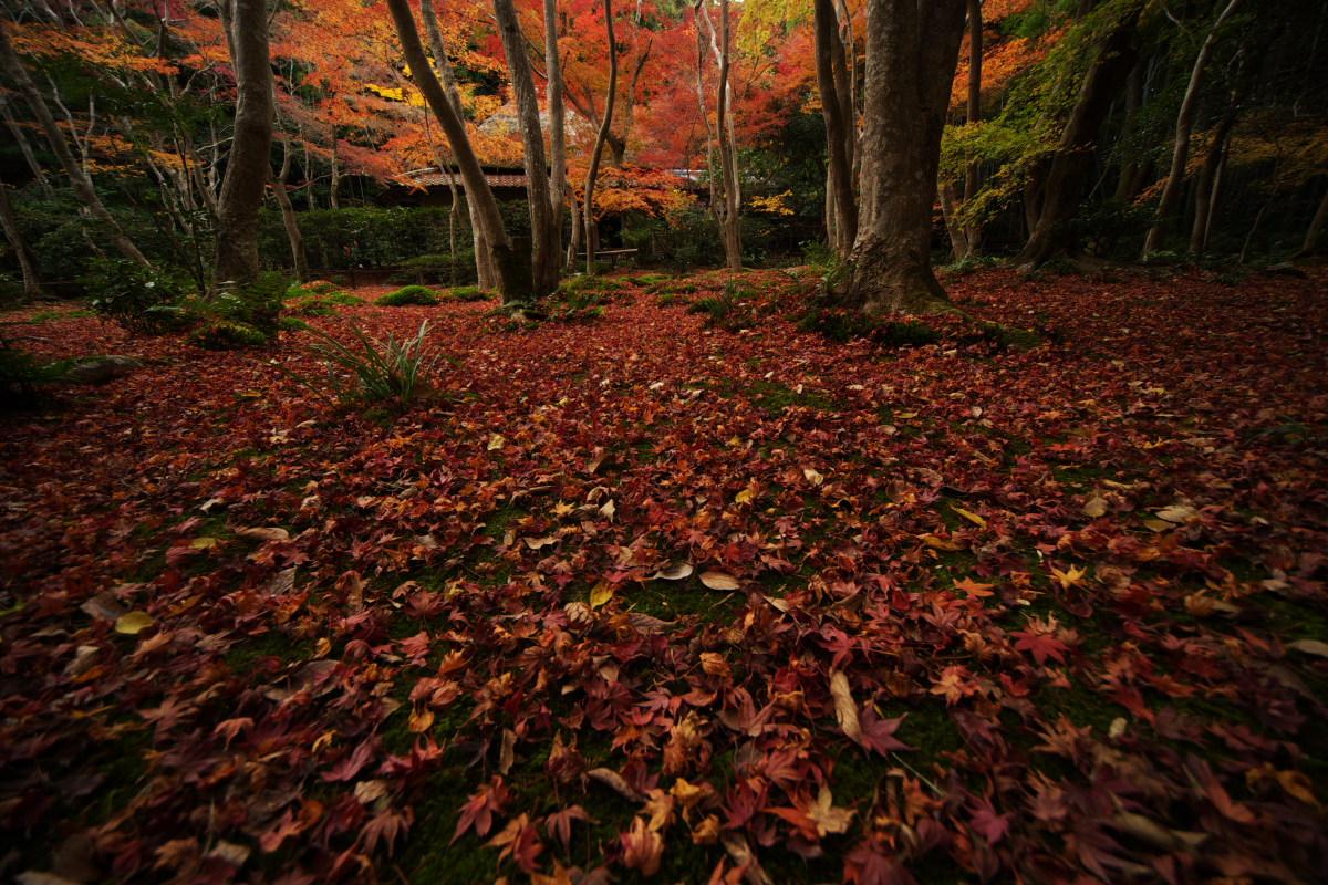 紅葉 2011_f0021869_054650.jpg