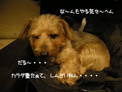 b0249672_2012885.jpg