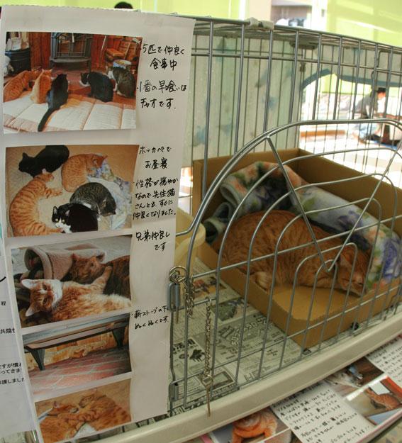 『猫譲渡会』_d0071596_21304535.jpg